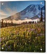Rainier Golden Sunlit Meadows Acrylic Print