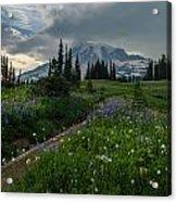 Rainier Meadows Wandering Acrylic Print