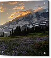Rainier Purple Lupine Carpet Acrylic Print