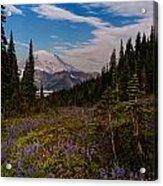 Rainier Tipsoo Wildflowers Acrylic Print