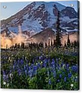 Rainier Wildflower Meadows Pano Acrylic Print