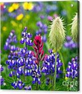 Rainier Wildflowers Acrylic Print