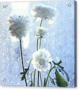 Raining Day  Acrylic Print
