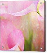 Rainy Day Calla Lilies  Acrylic Print