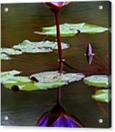 Rainy Day Lotus Flower Reflections IIi Acrylic Print