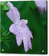 Rainy Day Mallow Acrylic Print