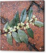 Rainy Day On Fallen Leaves Acrylic Print