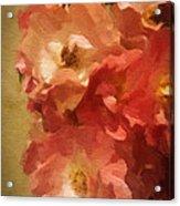 Ramblin Rose Memories Acrylic Print