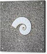 Rams' Horm Shell Acrylic Print