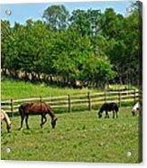 Ranch Daisies Acrylic Print
