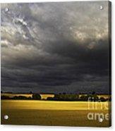 Rapefield Under Dark Sky Acrylic Print