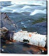 Rapids And Birch Acrylic Print