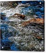 Rapids On The Gore Acrylic Print
