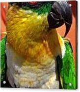 Rare Bird Acrylic Print