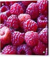 Homegrown Organic Raspberries, Chiloquin Oregon Acrylic Print