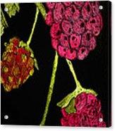 Raspberry Fabric Acrylic Print