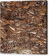 Rattle Snake Round-up Acrylic Print