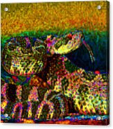Rattlesnake 20130204p0 Acrylic Print by Wingsdomain Art and Photography