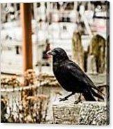 Raven Ucluelet  Acrylic Print