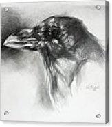 Raven Head Acrylic Print