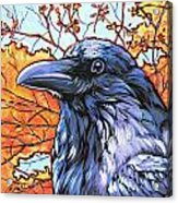 Raven Head Acrylic Print by Nadi Spencer