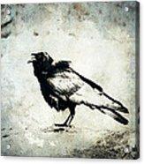 Raven On Blue Acrylic Print
