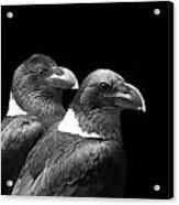 Raven Pair Acrylic Print