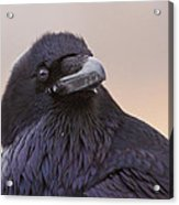 Raven Portrait Acrylic Print