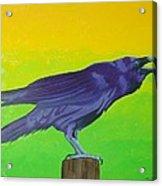 Raven Singing Acrylic Print