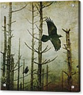 Ravens Of The Mist Artistic Expression Acrylic Print