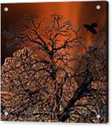 Ravens Tree Acrylic Print