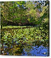 Ravine Gardens - A Different Look At Florida Acrylic Print by Christine Till