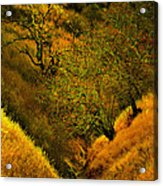 Ravine Trail Acrylic Print