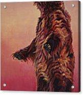 Ray Acrylic Print