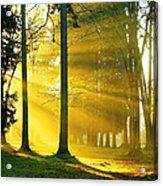 Rays Of Sun Acrylic Print