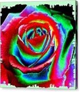 Razzle Dazzle Rose Acrylic Print