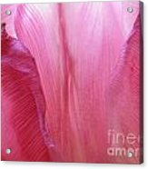 Re-enforcements In Pink Acrylic Print