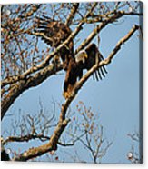 Reach For New Heights Acrylic Print