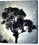 Reach For The Sky .. Acrylic Print