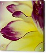 Reach Out Acrylic Print