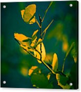 Reaching For The Light Acrylic Print