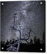 Reaching For The Stars Acrylic Print