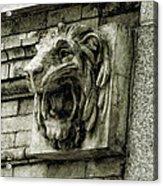 Reading Lion Acrylic Print