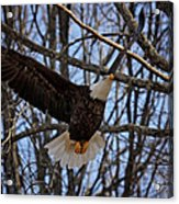 Ready For A Landing Acrylic Print