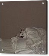 Ready For Bed Acrylic Print