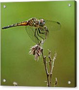 Ready For Lift-off  Acrylic Print