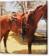 Ready For Some Ropin Acrylic Print