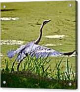 Ready For Takeoff. Acrylic Print