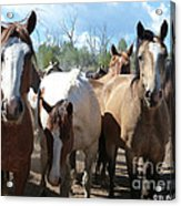 Real Close Acrylic Print