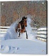 Real Horse Power Acrylic Print